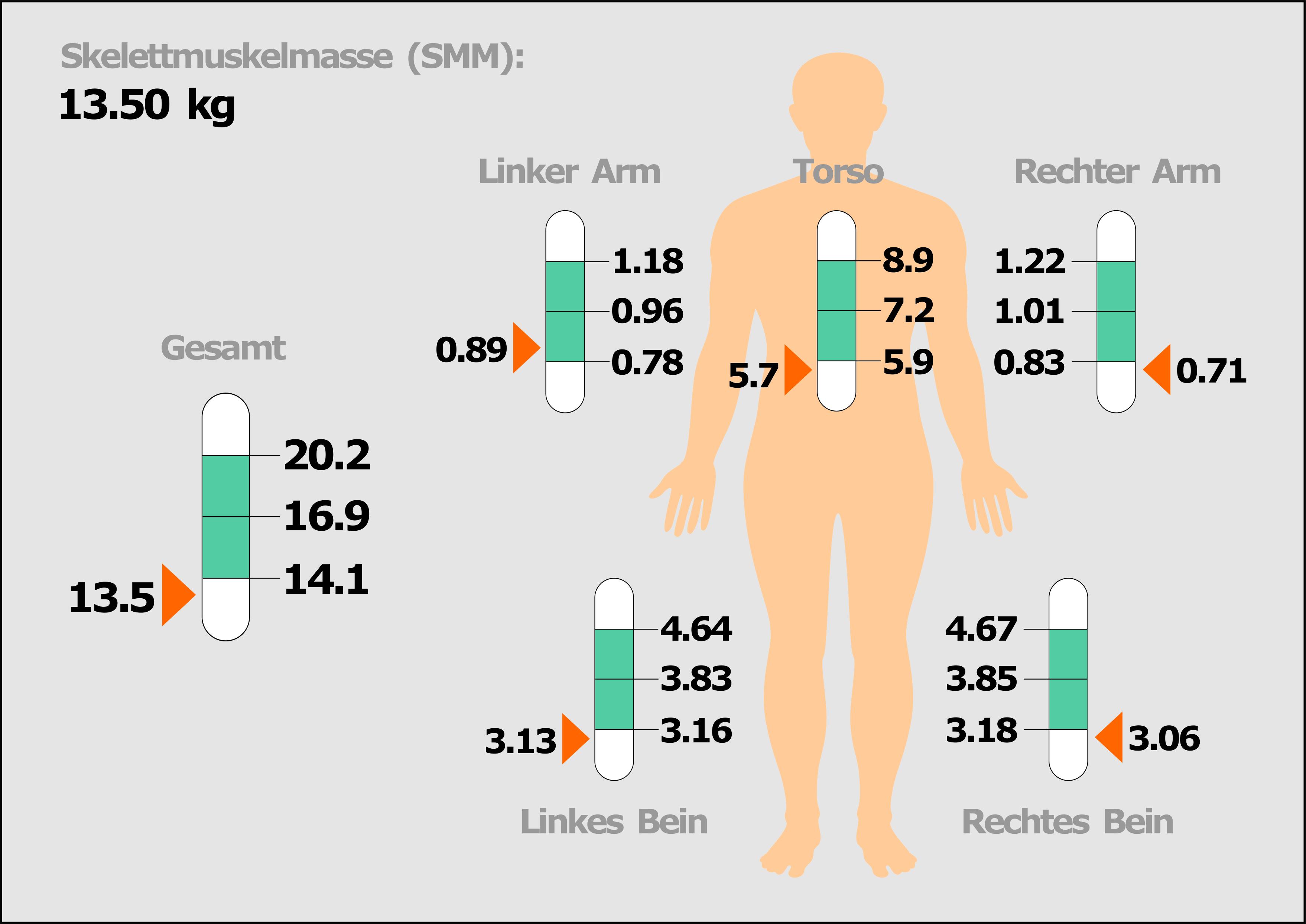 Schaubild Sklettmuskelmasse Mangelernährung bei COPD-Patienten