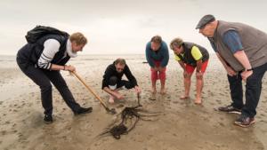 Freizeit ohne Langeweile im Wattenmeer Nordseeklinik Westfalen Rehabilitation am Meer
